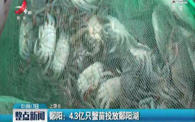 鄱阳:4.3亿只蟹苗投放鄱阳湖