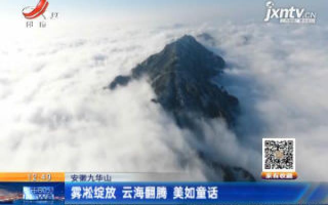 安徽九华山:雾凇绽放 云海翻腾美如童话