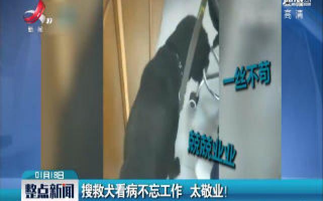 山西阳泉:搜救犬看病不忘工作 太敬业!