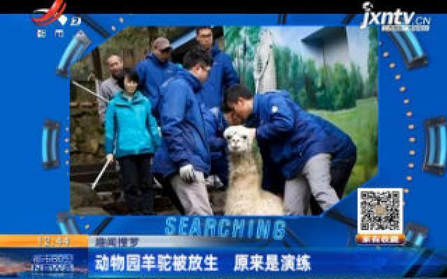 【趣闻搜罗】杭州:动物园羊驼被放生 原来是演练