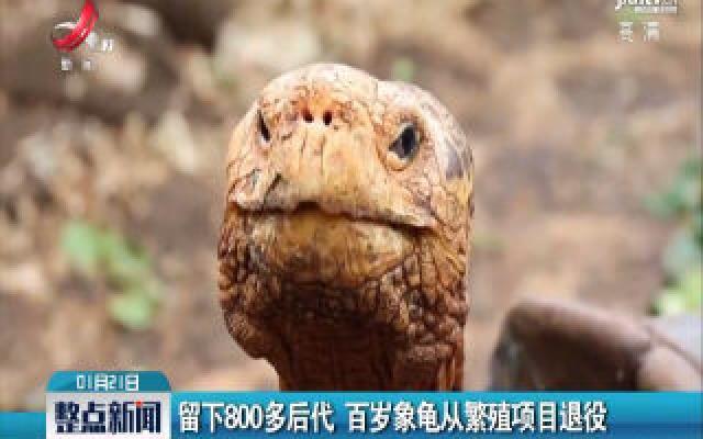 留下800多后代 百岁象龟从繁殖项目退役