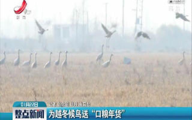 """为越冬候鸟送""""口粮年货"""""""