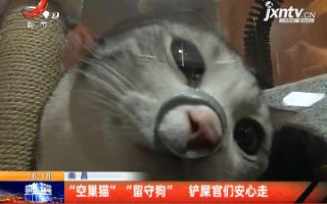 """南昌:""""空巢猫""""""""留守狗"""" 铲屎官们安心走"""