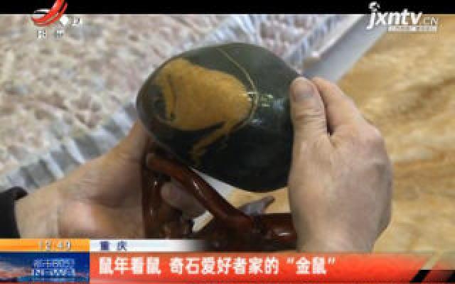 """重庆:鼠年看鼠 奇石爱好者家的""""金鼠"""""""
