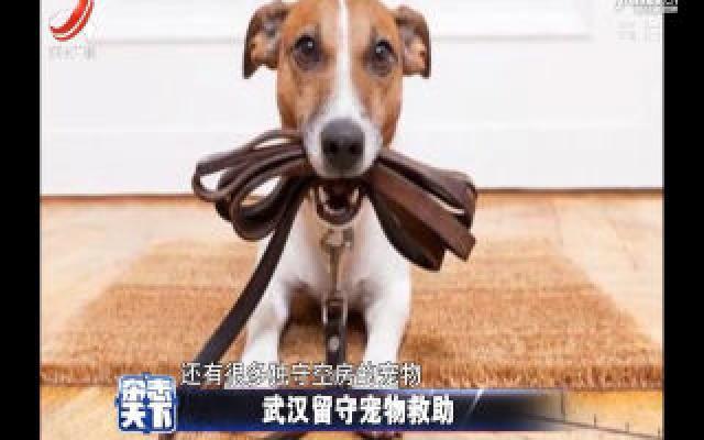 武汉留守宠物救助 疫情无情人间有爱