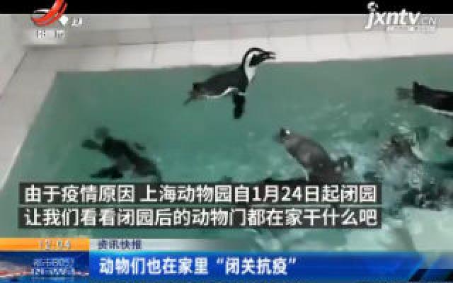 """上海:动物们也在家里""""闭关抗疫"""""""