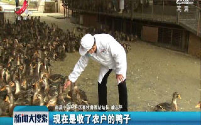 【众志成城 抗击疫情】煌上煌家禽屠宰线提前复产保供应