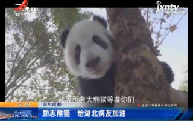 四川成都:励志熊猫 给湖北病友加油