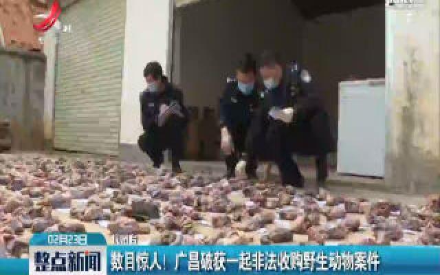 数目惊人!广昌破获一起非法收购野生动物案件