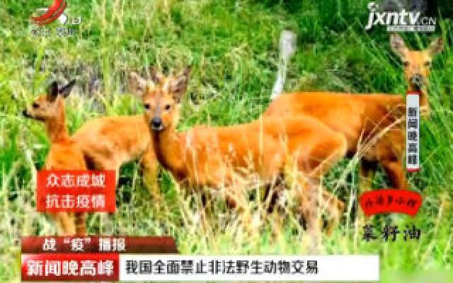 """【战""""役""""播报】我国全面禁止非法野生动物交易"""