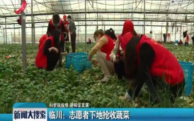 【科学战疫情 硬核促发展】临川:志愿者下地抢收蔬菜