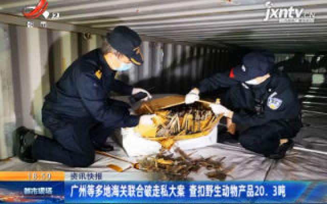 广州等多地海关联合破走私大案 查扣野生动物产品20.3吨