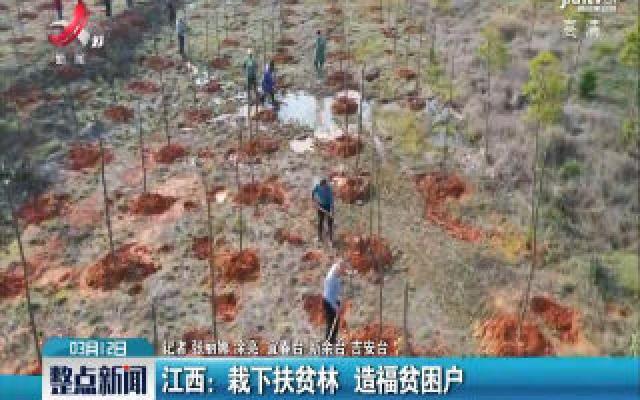 江西:栽下扶贫林 造福贫困户