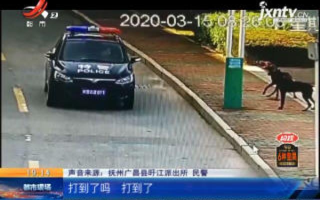抚州广昌:4人被咬伤!警方果断开枪为民除害!