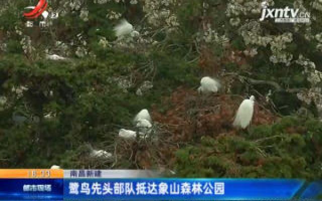 南昌新建:鹭鸟先头部队抵达象山森林公园