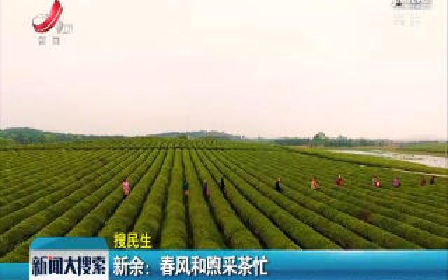 【搜民生】新余:春风和煦采茶忙