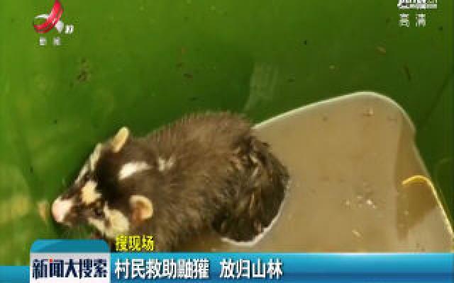 【搜现场】万安:村民救助鼬獾 放归山林