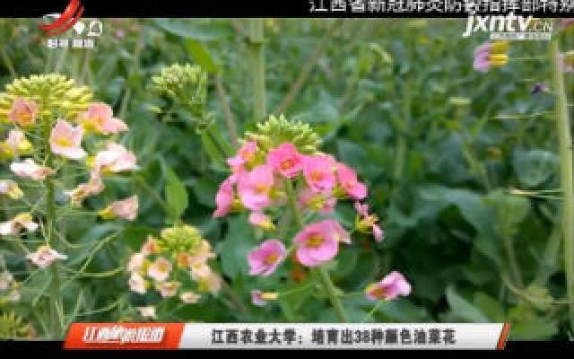 江西农业大学:培育出38种颜色油菜花