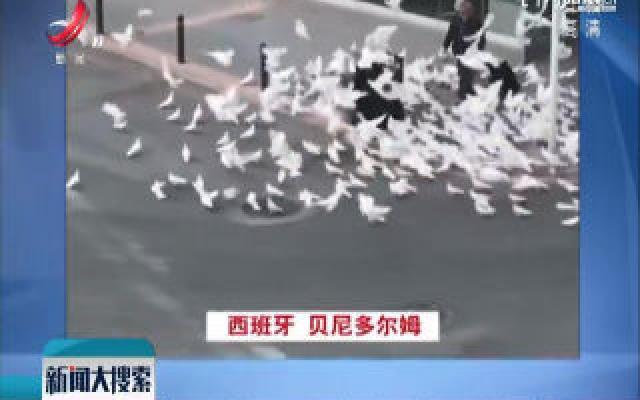 疫情期间 在城市街头游走的动物们