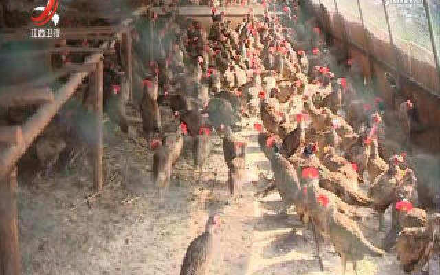 江西:非法食用野生动物 最高可罚两万元