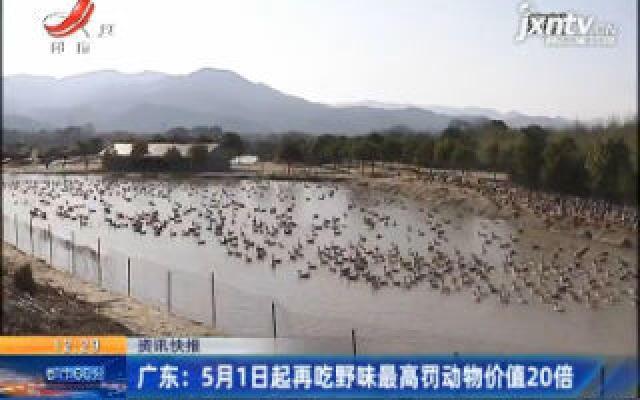 广东:5月1日起再吃野味最高罚动物价值20倍