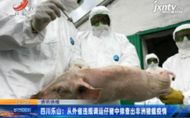 四川乐山:从外省违规调运仔猪中排查出非洲猪瘟疫情