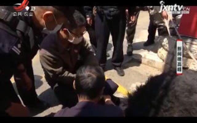 """云南:鸵鸟三环""""飚车""""惊呆市民 保安师傅该出手时就出手"""