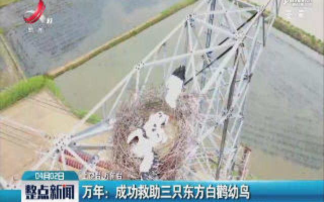 万年:成功救助三只东方白鹳幼鸟