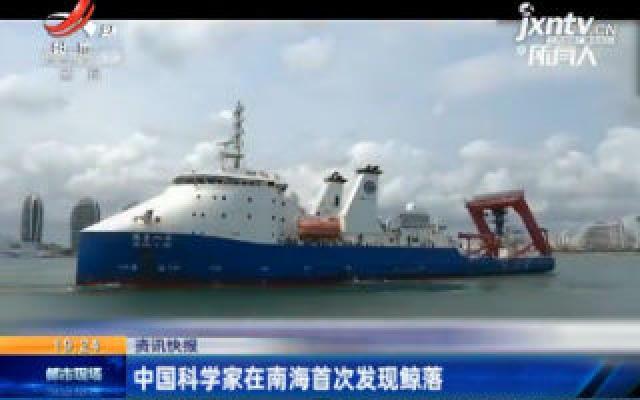 中国科学家在南海首次发现鲸落