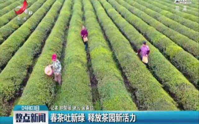 宜春:春茶吐新绿 释放茶园新活力