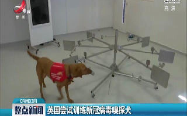英国尝试训练新冠病毒嗅探犬