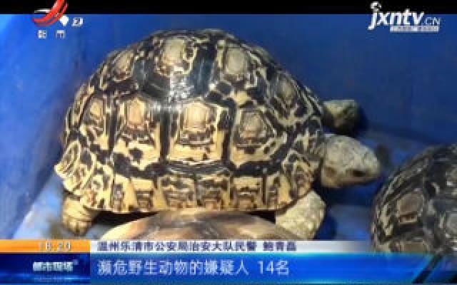 """浙江乐清:宠物不是想养就能养 14名""""龟友""""被拘"""