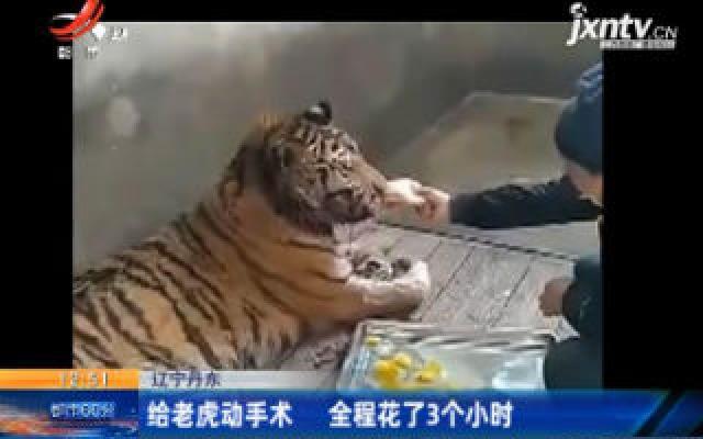辽宁丹东:给老虎动手术 全程花了3个小时