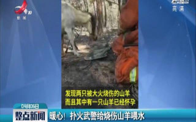 西昌:暖心!扑火武警给烧伤山羊喂水