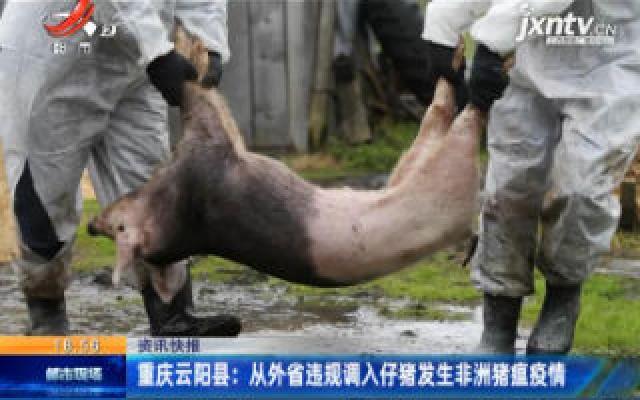 重庆云阳县:从外省违规调入仔猪发生非洲猪瘟疫情