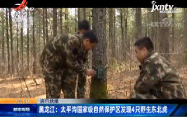 黑龙江:太平沟国家级自然保护区发生4只野生东北虎