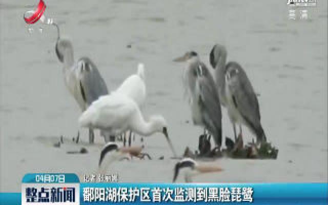 鄱阳湖保护区首次监测到黑脸琵鹭