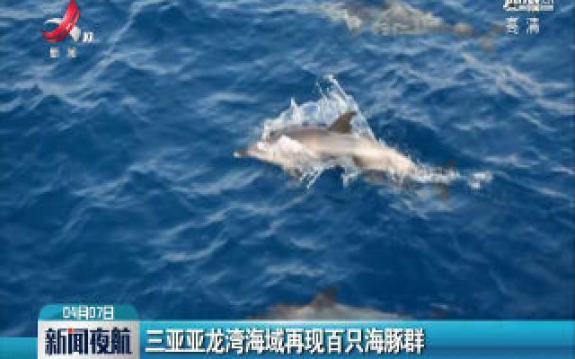 三亚亚龙湾海域再现百只海豚群