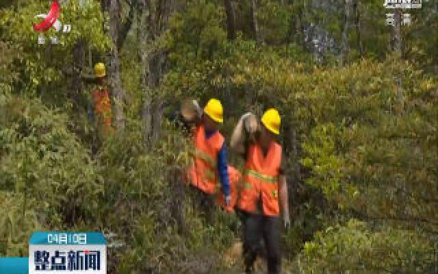 南昌新建:防治松材线虫 守护青山绿林