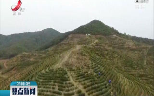 都昌:茶叶产业助力贫困群众致富
