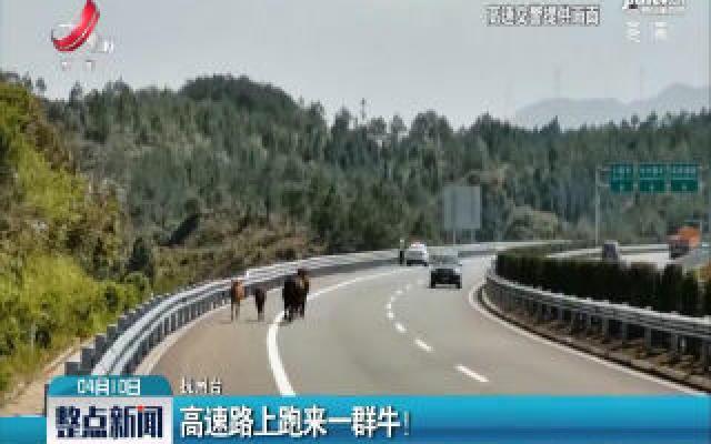 抚州:高速路上跑来一群牛!