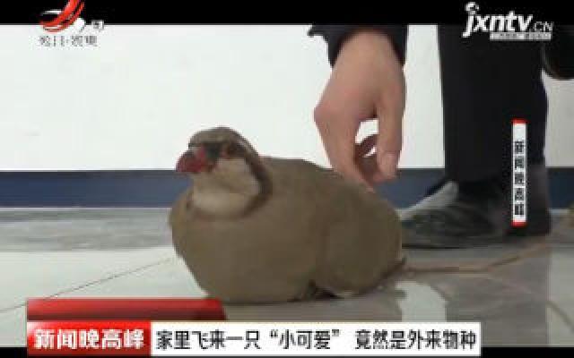 """江苏:家里飞来一只""""小可爱""""竟然是外来物种"""