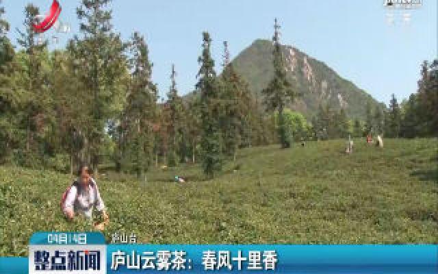 庐山云雾茶:春风十里香