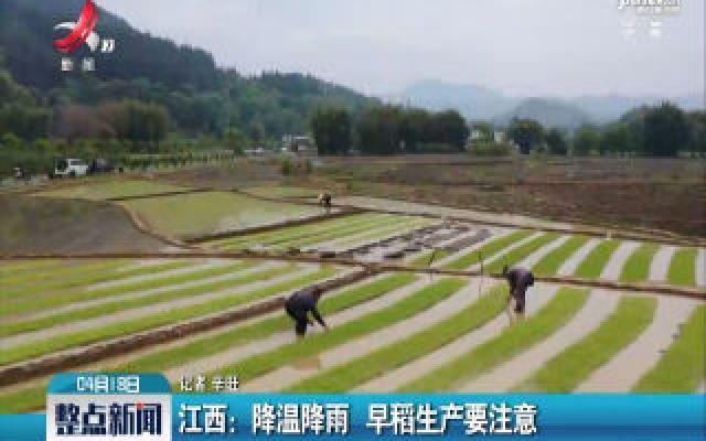 江西:降温降雨 早稻生产要注意