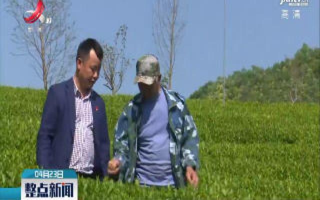 浮梁:茶产业助力脱贫攻坚