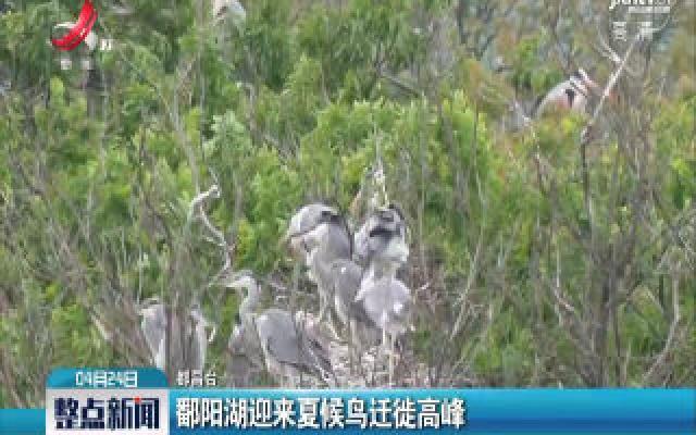 鄱阳湖迎来夏候鸟迁徙高峰