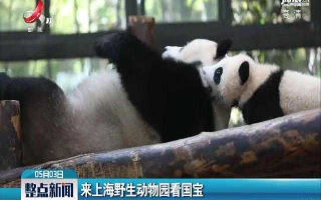 来上海野生动物园看国宝