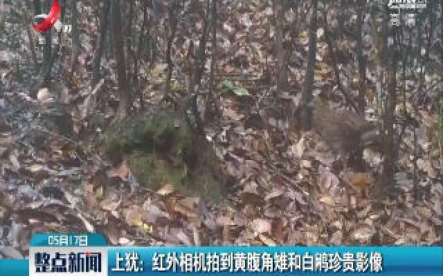 上犹:红外相机拍到黄腹角雉和白鹇珍贵影像
