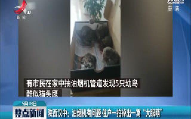 """陕西汉中:油烟机有问题 住户一拍掉出一窝""""大眼萌"""""""