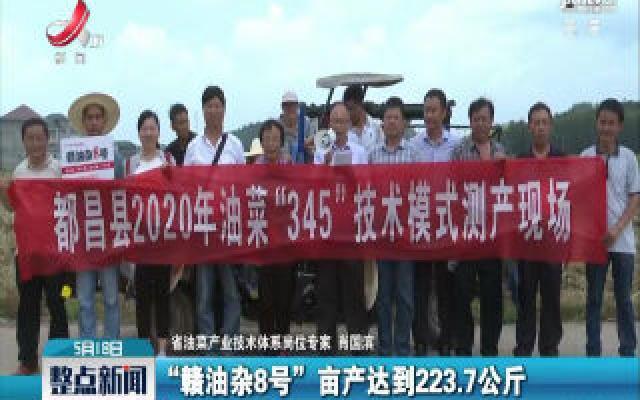 油菜单产223.7公斤 创造江西新纪录